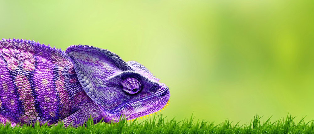 Homepage-Homeslider-Stand.Out-Chameleon.Purple-e1413982782556